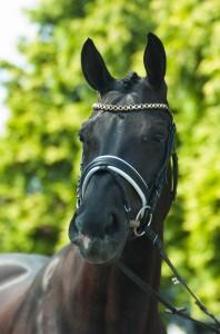 taams horses fotografie